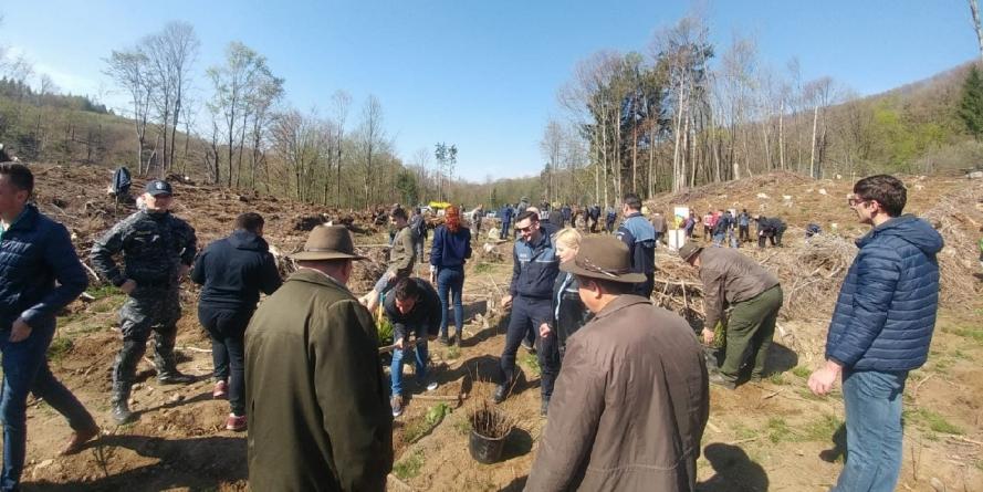 11.000 de puieți vor fi plantați în pădurile din jurul orașului Baia-Sprie