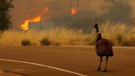 """""""Nu am avut cer albastru de o lună"""" – mărturisește o maramureșeancă stabilită în Australia cuprinsă de flăcări (GALERIE FOTO)"""
