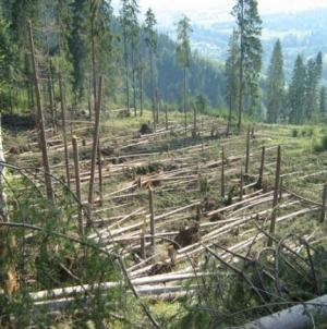 Peste 5.000 de hectare de pădure au fost afectate în Maramureș de vremea rea