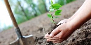 În Maramureș se vor planta de la zero 140 de păduri