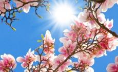 Meteo Maramureș: Vreme bună și însorită, așteptată în județ în următoarele zile; Estimările pe două săptămâni